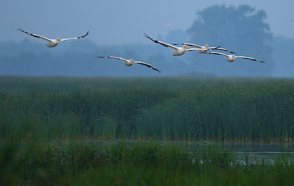 Sponsor a wetland bird species and support the Wisconsin Breeding Bird Atlas II