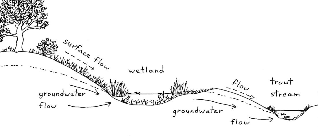 Wetlands And Groundwater  It U0026 39 S All Connected
