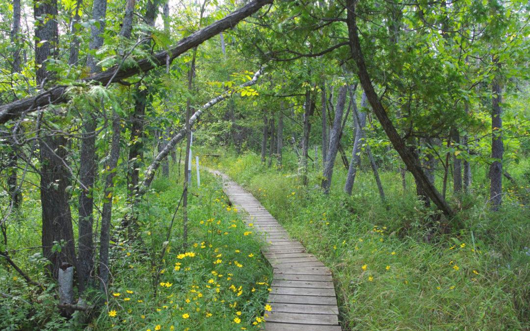 Path through bog