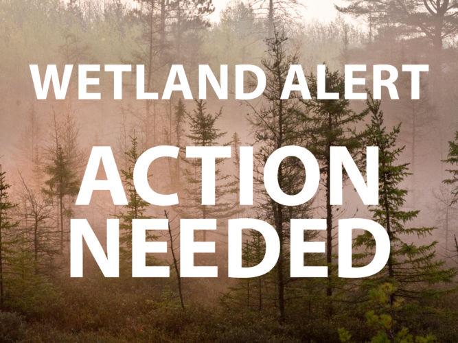 Wetland Alert: Action Needed