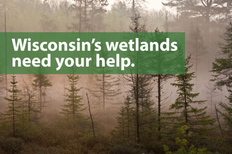 Wetland Alert: Isolated wetlands need your voice