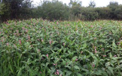 Is a wetland drawdown good for wildlife?