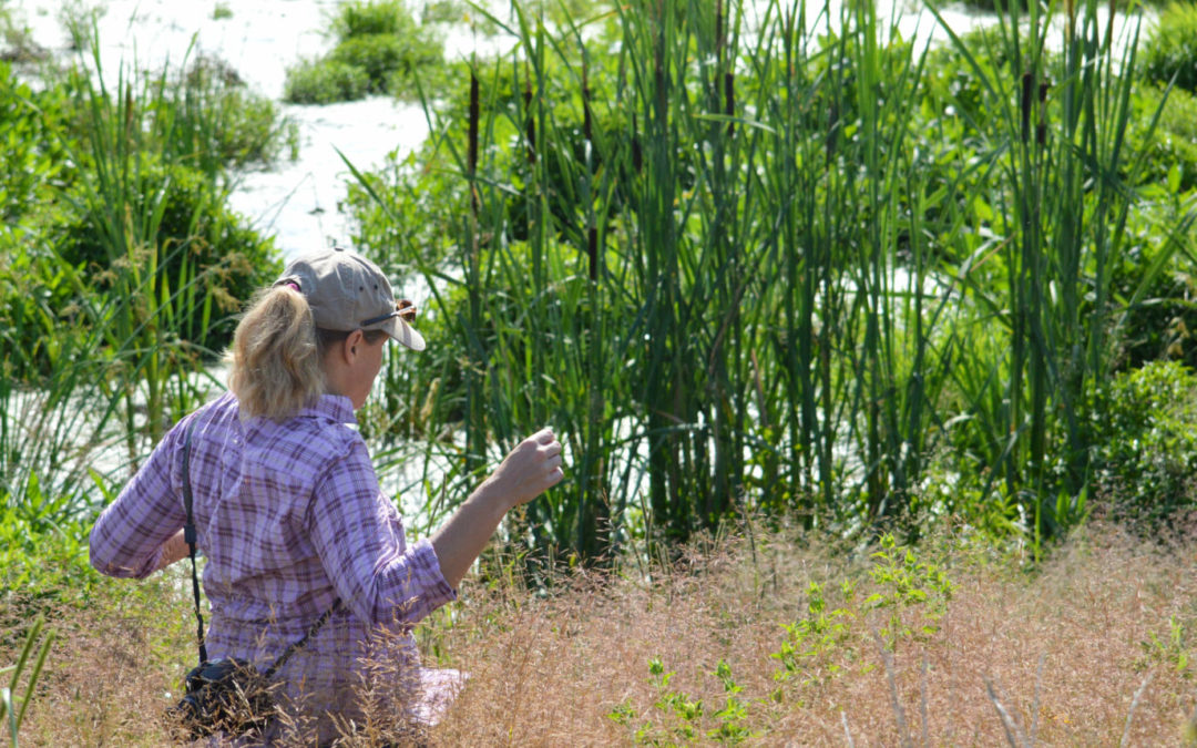 Environmental engineer Jill Kostel inspects a recently constructed wetland in Illinois.