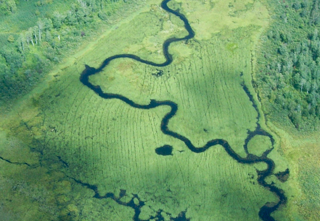 An aerial photo looking at a meandering river surrounded by beds of wild rice. You can see lines in the vegetation from canoes.