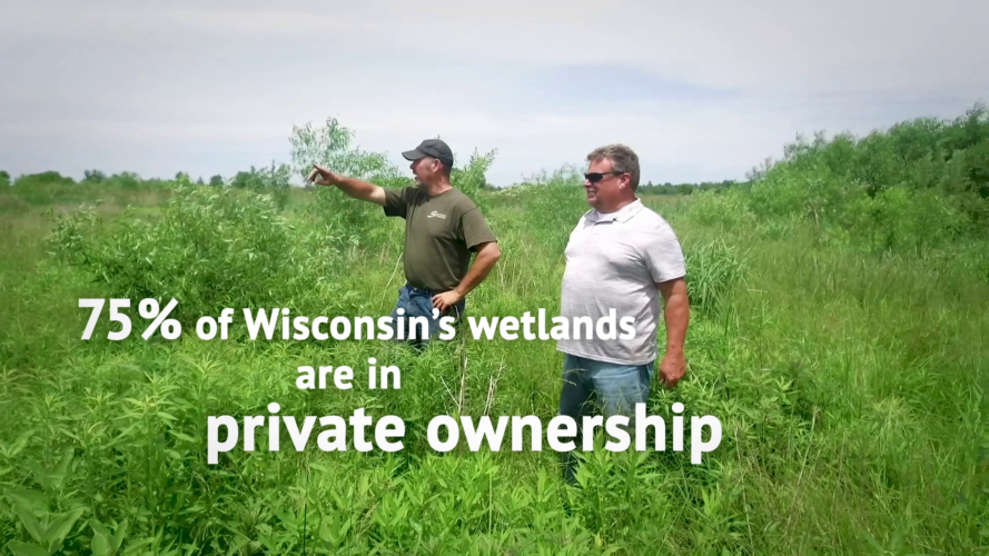Private landowners play a vital role in caring for wetlands
