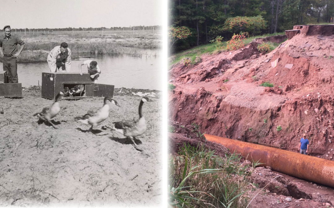 50 years of wetland science