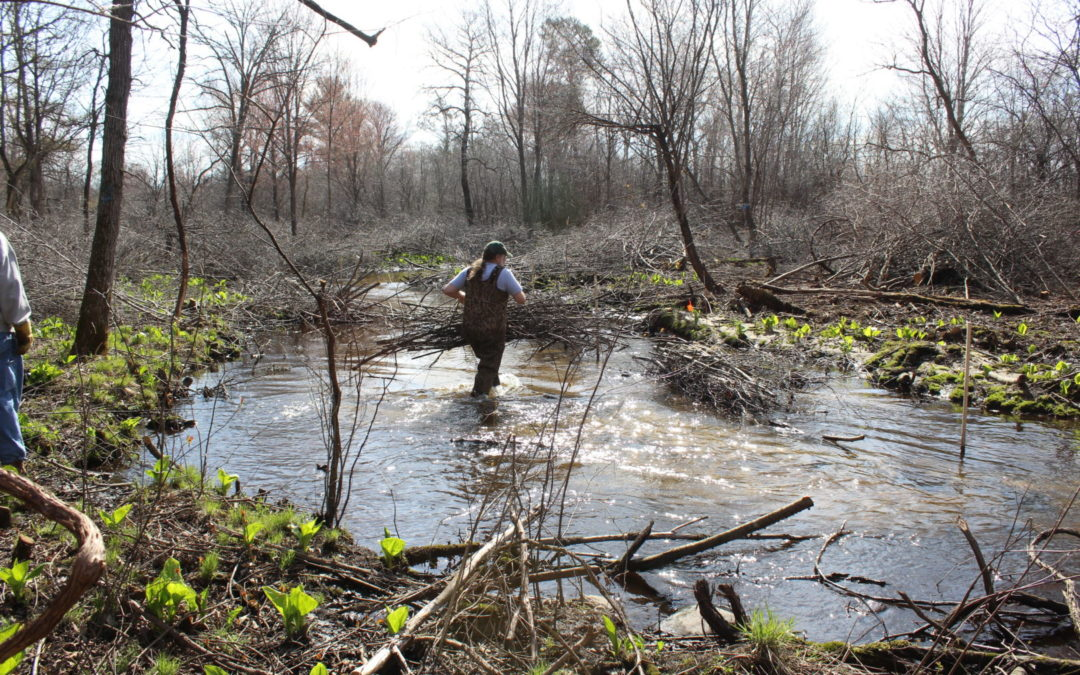 Volunteers help to line a portion of the Little Plover River with bundles (a common wetland restoration practice).