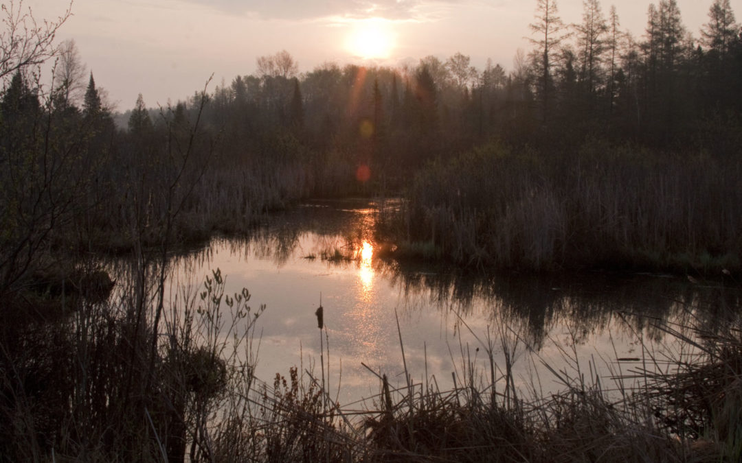 What wetlands can teach us about change