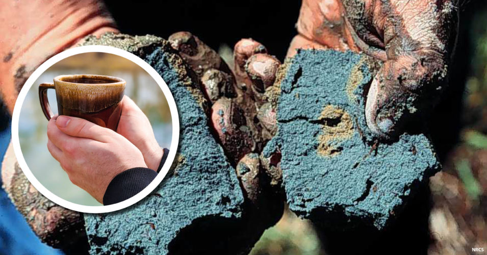 Wetland Coffee Break: Wetland Soils 101, way more than just mud on your boots