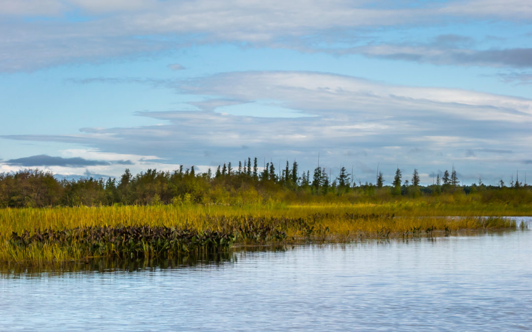 Seizing opportunities to build climate resilience with wetlands