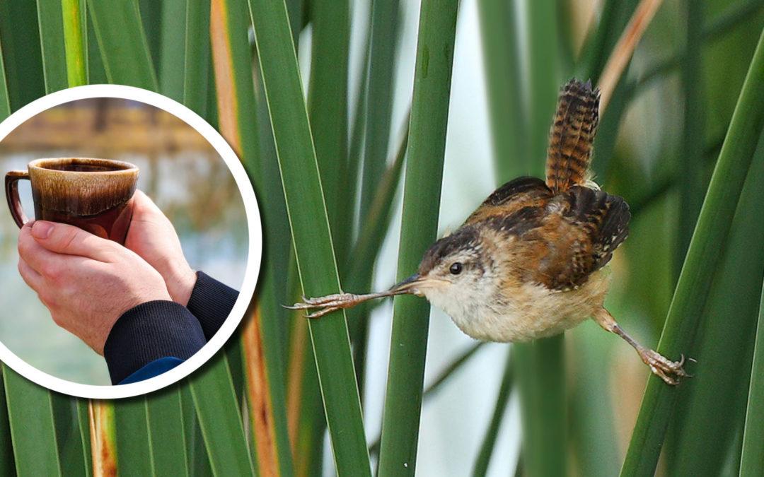 Wetland Coffee Break: Birding Wisconsin's wetlands