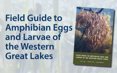 New Field Guide to Amphibian Eggs and Larvae of the Western Great Lakes!