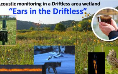 Wetland Coffee Break: Ears in the Driftless