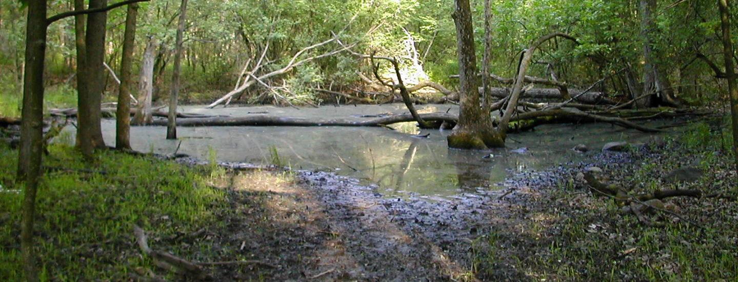 An ephemeral pond