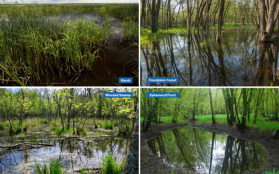 How to identify Wisconsin's common wetland types, Part I