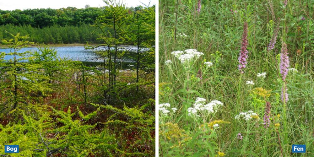 A photo of a bog and a fen.