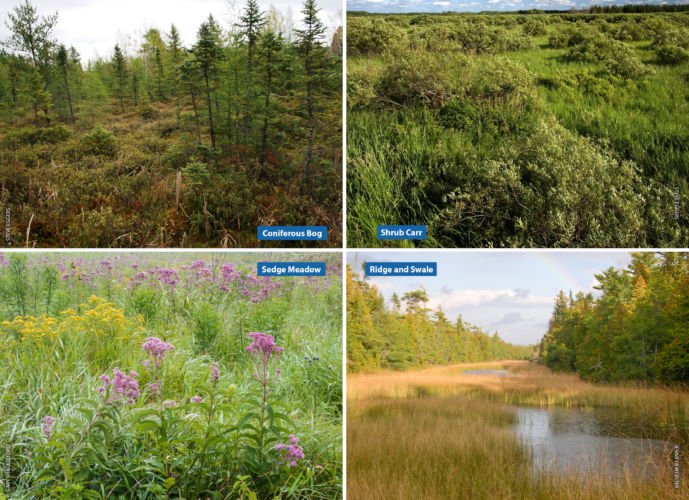 Four image collage of a coniferous bog, shrub carr wetland, sedge meadow, and ridge and swale.