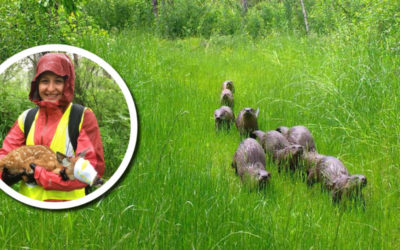 Wetland Coffee Break: Snapshot Wisconsin: Gathering and using trail camera data in wetlands and beyond