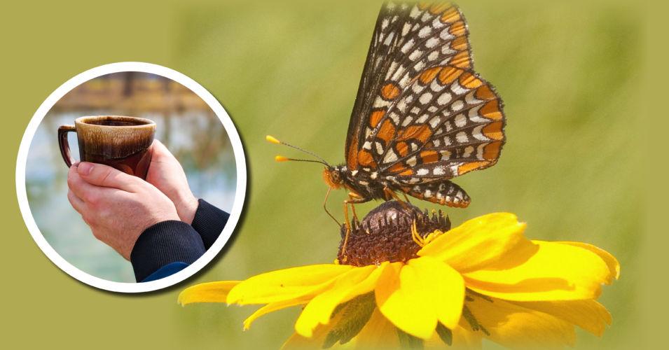 Wetland Coffee Break: Wetland butterflies of Wisconsin