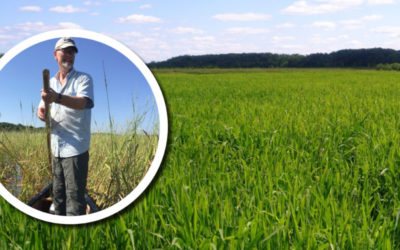 Wetland Coffee Break: Visiting the Great Spirit's Garden: Wild rice in Wisconsin's wetlands